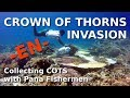 How to collect Crown of Thorns Starfish with the help of Pana Fishermen - English - COTS Philippines