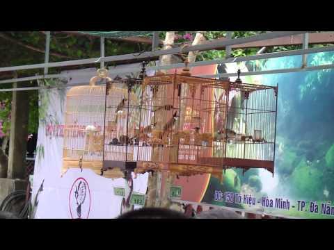 Vòng chung kết, Hội chào mào Bồng Lai ngày 7/4/2013