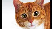 Сухой корм чойс для кошек - YouTube