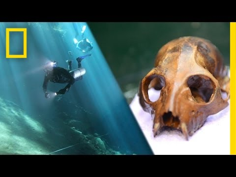 Underwater Lemur Graveyard Discovered | National Geographic