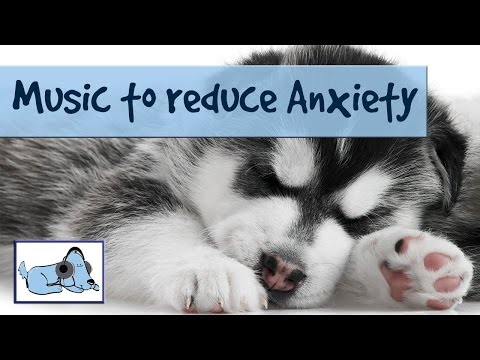 music-to-help-dogs-through-thunderstorms---reduces-anxiety-and-crying-due-to-thunder-and-lightning