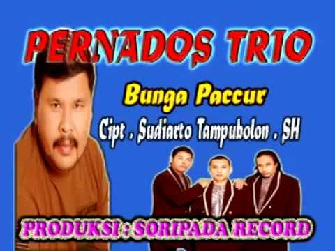 Bunga Paccur - Pernandos Trio