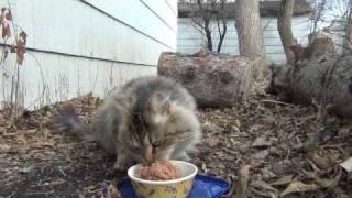 Feeding the stray cat January 10th 2012