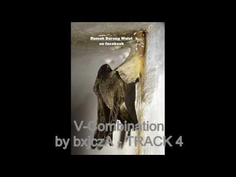 Suara Pemikat  Burung Walet