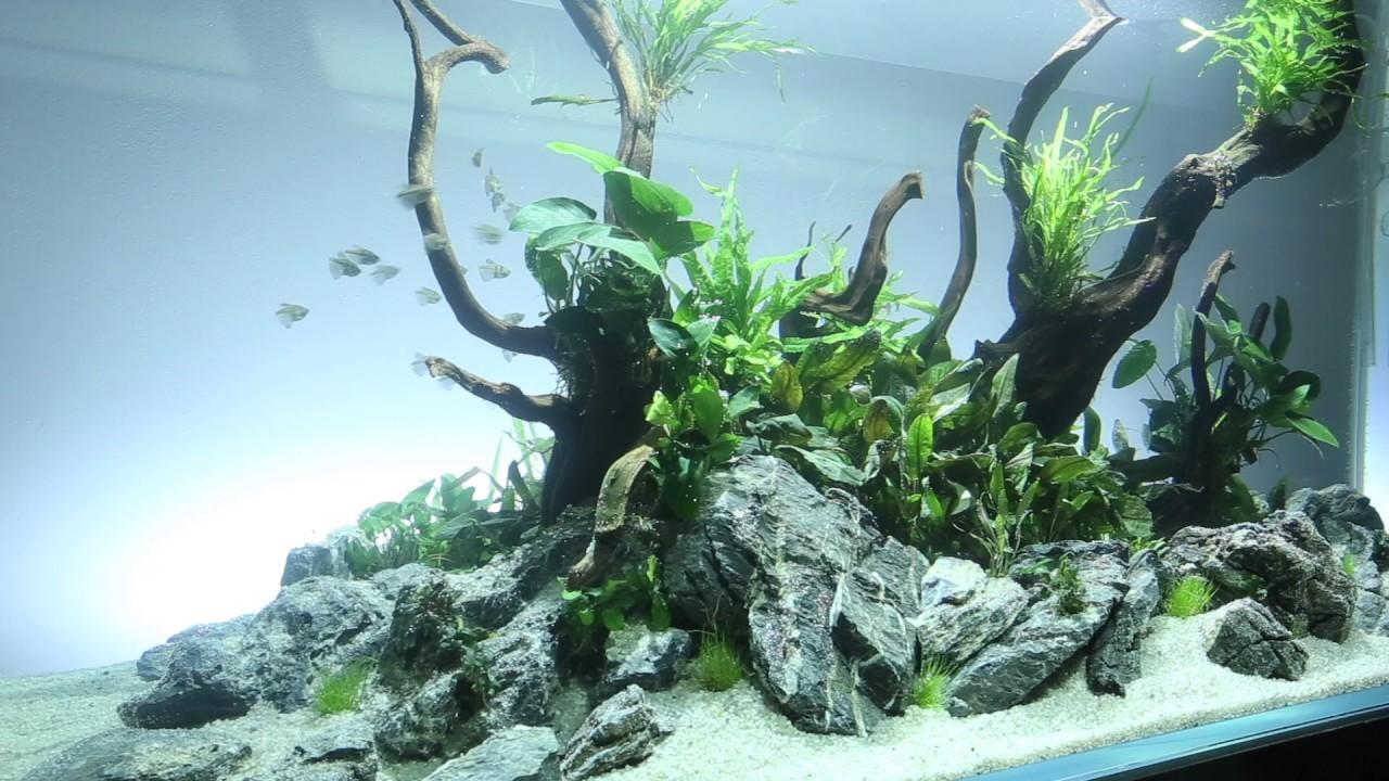 Aquascaper 1500 Nature Aquarium - YouTube