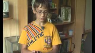 Дома у 13-летнего пензенца живут экзотические тараканы, пауки и геккон