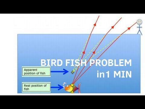 Bird Fish Problem | Ch-3 Refraction At Plane Surface Optics Ncert Class 12 Lectures For Neet Exam