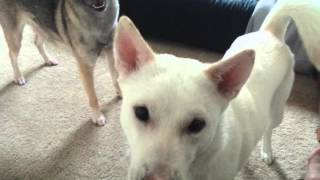 Some very boring footage of indoor zoomie time between Nami and Fio...