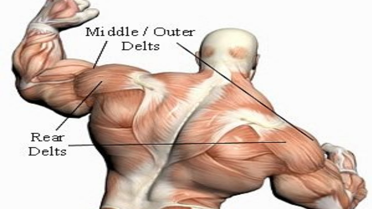 How To Train Rear Delts Effectively - YouTube