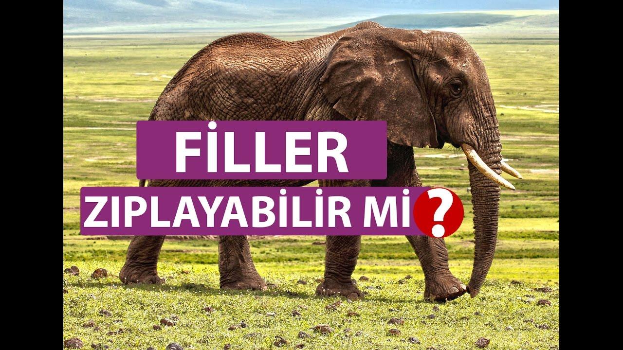 Filler Hakkında Bilinmeyenler │Filler Zıplayabilir mi ? - Hayvanlar Alemi