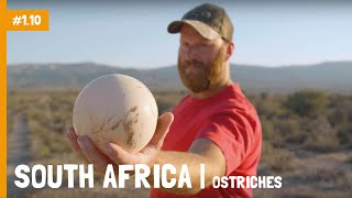 South Africa | Ostrich capital of the world | Charlie's Travels