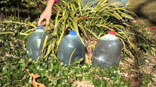 The Uses for Plastic Milk Containers for Gardens : Gardening Tips & Advice