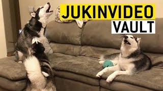 Husky Fun Facts || JukinVideo Vault