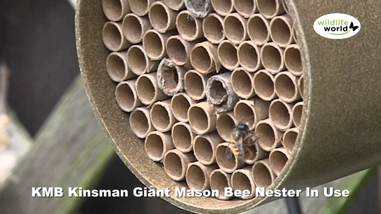 The Wildlife World KMB Kinsman Bee Nester Product in Use Video - YouTube