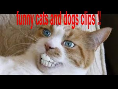 top 10 funniest reactions of cats and dog this week 2018 (crazy!!!)
