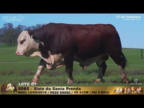 LOTE 007