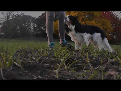 🍁 89 dog tricks by Charlie | 2 years | Cavalier King Charles spaniel 🐶