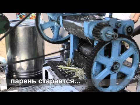 Тростник обыкновенный: описание, применение, фото ::