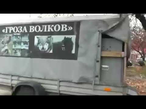 Питомник Харина Юрия Борисовича г. Курск