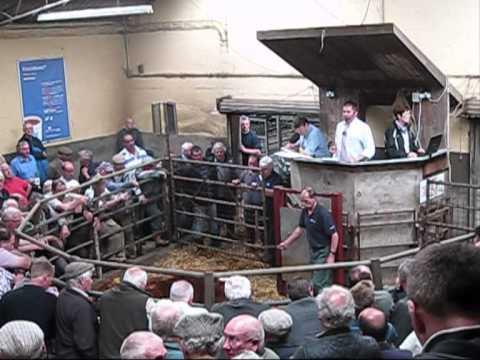 Abergavenny Livestock market, June 2012