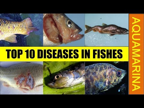 Top 10 Diseases In Fishes Commonly Found Different Diseases In Fish