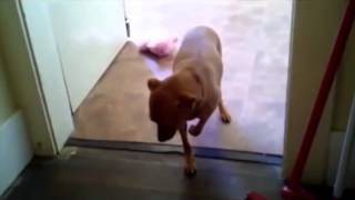 The Dog Slow Mo Walk Of Shame