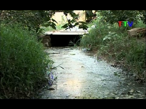 Chăn nuôi trang trại gây ô nhiễm môi trường khu dân cư