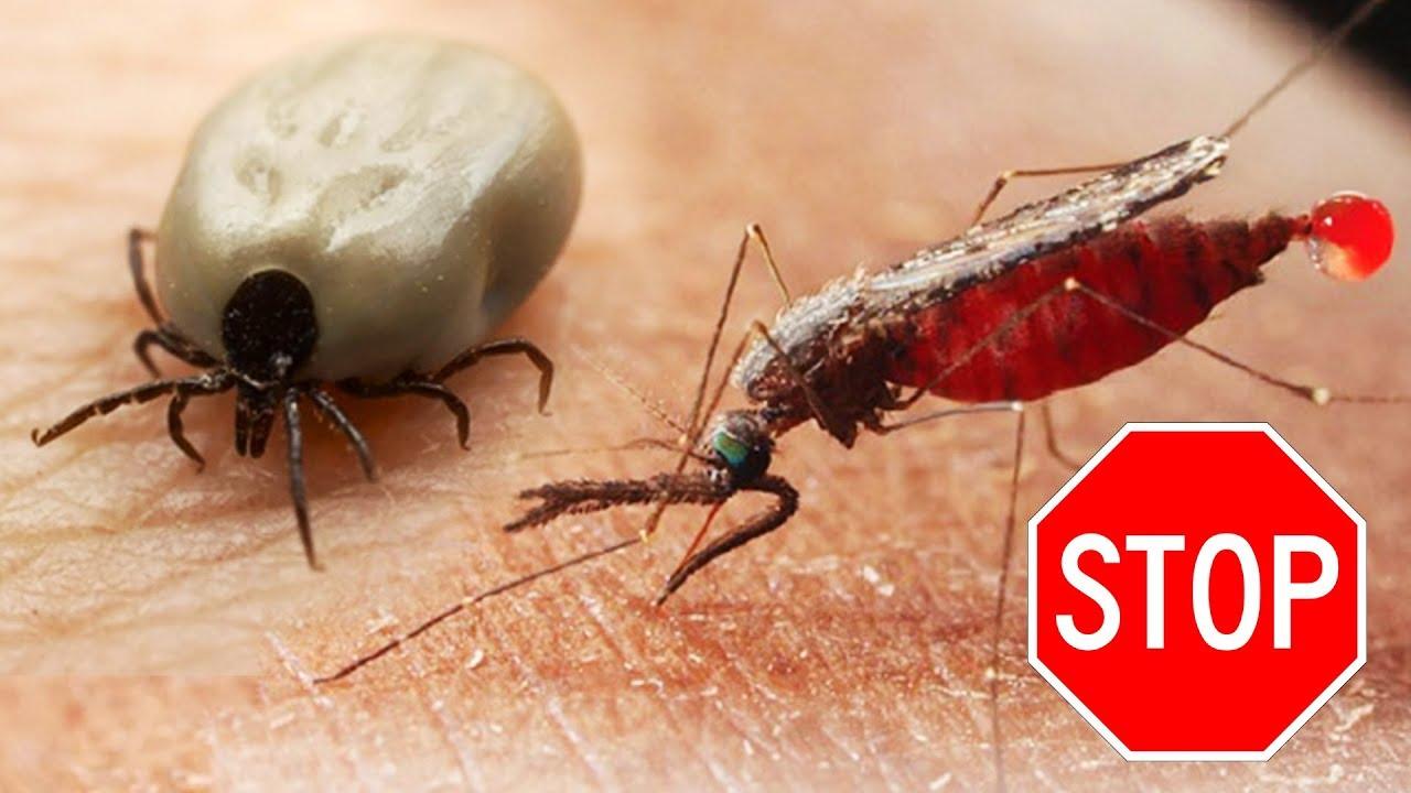 как быстро избавиться от комаров