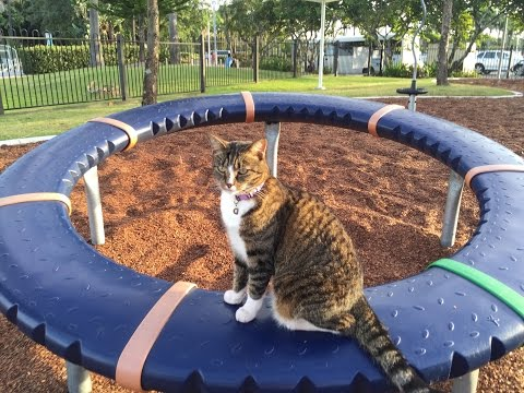 CAT-GO-ROUND