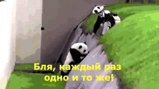 Пьяная панда с комментами