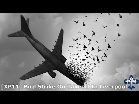 [XP11] Bird Strike on Takeoff at Liverpool  -IXEG 733 On VATSIM