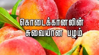 peaches fruit 🍑கொடைக்கானலின் சுவையான பழம்