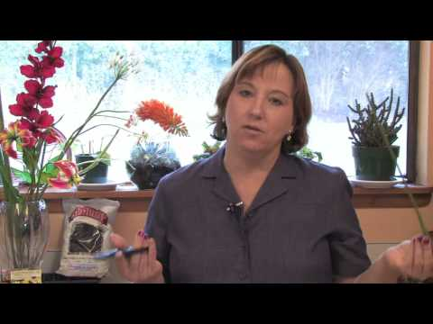 Gardening Lessons : How to Cut Flowers to Last Longer in a Vase