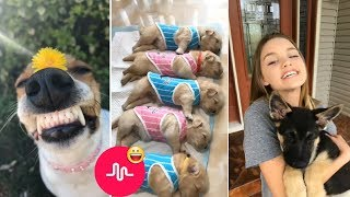 Cute puppies, funny puppy video compilation - Funny Musically