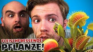 Wir züchten FLEISCHFRESSENDE Pflanzen! Experiment