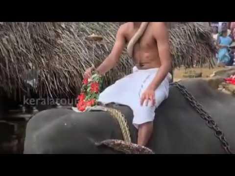 kottiyoor Ulsavam 2016.... കൊട്ടിയൂർ വൈശാഖ ഉത്സവം 2016...