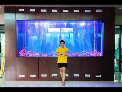 """Leng บางบอน 3  วันที่รอคอย """"วันลงปลา"""" (รอมา 2 ปีกว่า) ฝูงปลานกแก้ว 200 ในตู้สุดมโหฬาร 3.5 ม. Set 2"""