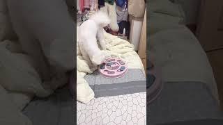 강아지 지능개발 장난감 첫 사용