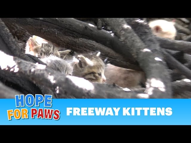 Hope For Paws received a call from an LAPD deputy for help!