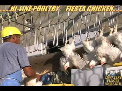 Hi-Line Poultry  Fiesta processing plant in Belize