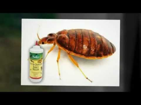 omri listed usda approvedbed repellents bugs kill bed bugs get rid of bed bugs within 48 hours. Black Bedroom Furniture Sets. Home Design Ideas