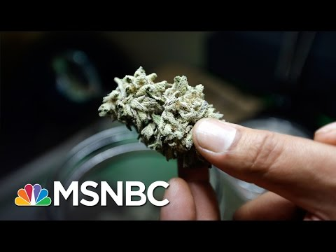 Marijuana Legalization Has Record-High Support In New Poll | MSNBC