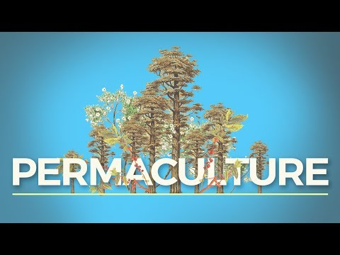 What Is Permaculture? (And Why Should I Care?)
