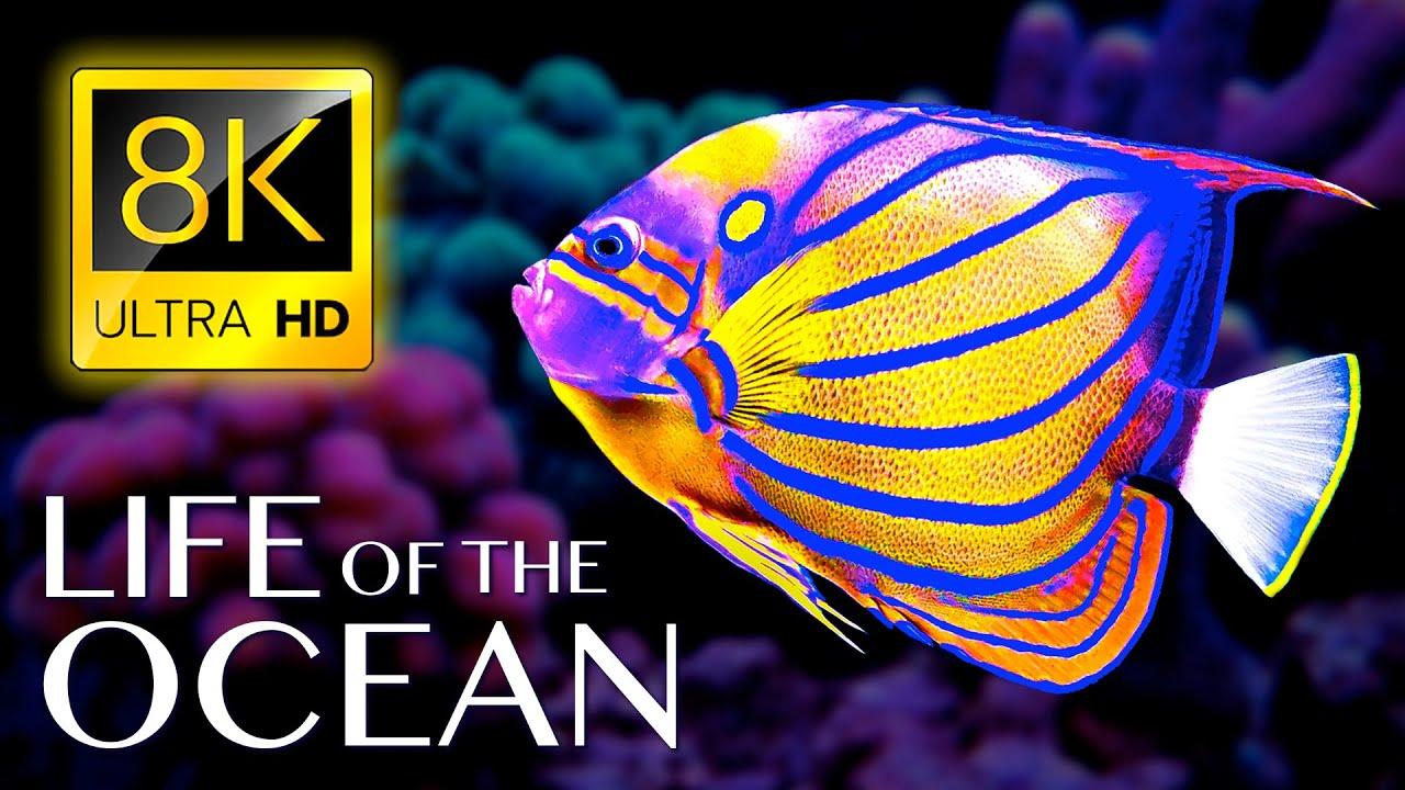 Life of the Ocean 8K ULTRA HD - 500 Marine Species with Relaxing Music and Ocean Sounds