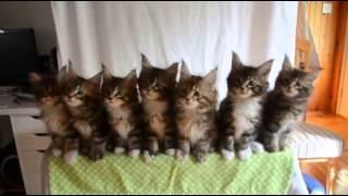 もう鉄板。7匹の子猫ズがそろって首をふりふりする姿のかわいいこと