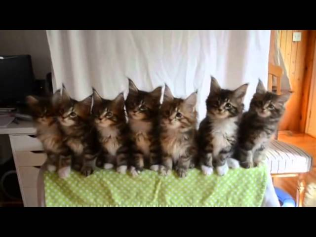 Cat Head Sync Dance – Cats Swinging/Shaking their heads