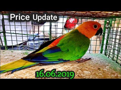 Galiff Street Price Update 16th June 2019 The Largest Bird Market In Asia