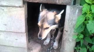 видео трусливый щенок.cowardly puppy
