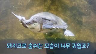 다양한 양서파충류가 있는 은산어울림생태박물관 [동네바보…