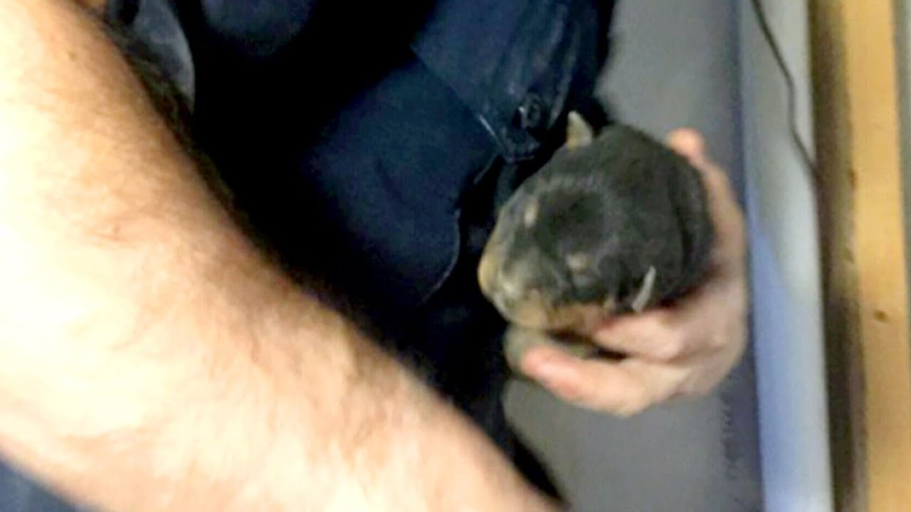 8-day-old puppies rescued from duct-work by firefighters